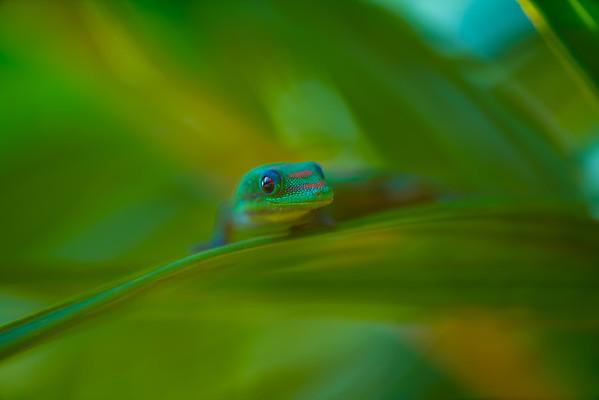Geckos and the like