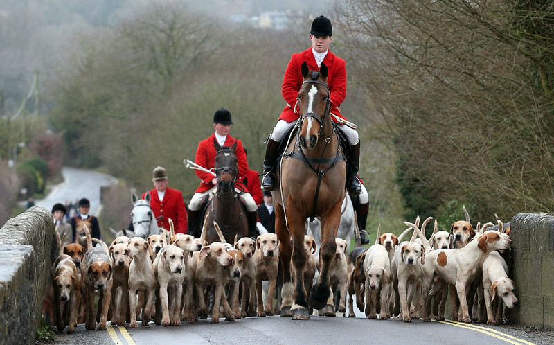 . Stuart Radbourne, huntsman and joint-master with the Avon Vale Hunt, leads the riders and hounds for their traditional Boxing Day hunt, on December 26, 2012 in Lacock, England. As hundreds of hunts met today, Environment Secretary Owen Paterson claimed that moves to repeal the ban on hunting with dogs in England and Wales may not happen in 2013, although he insisted it was still the government\'s intention to give MPs a free vote on lifting the ban.  (Photo by Matt Cardy/Getty Images)