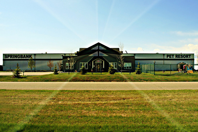 Springbank Pet Resort.jpg