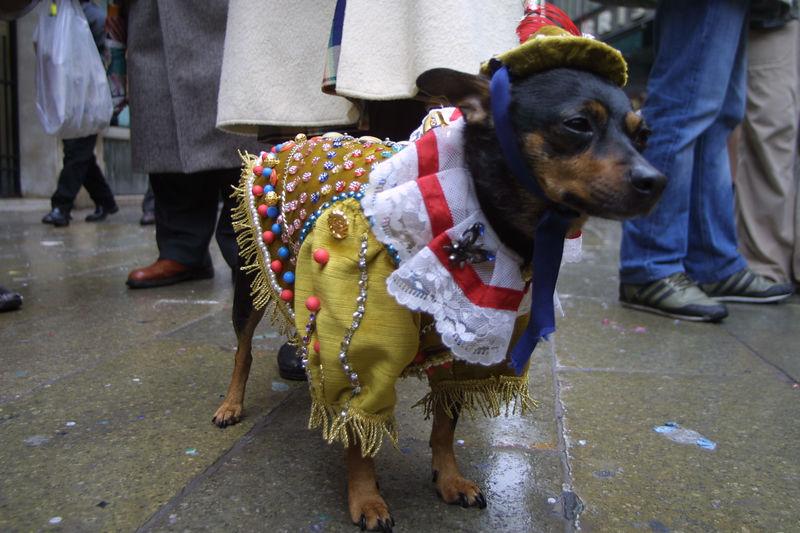 Venice Carnival 2004 - 17.jpg