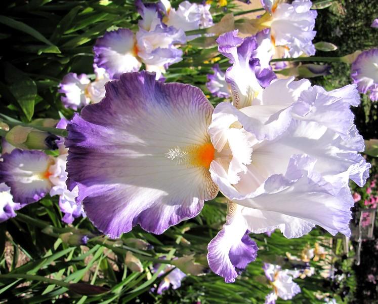 amh FLOWERS (1049).jpg