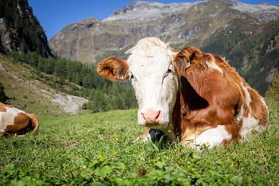 Von der Milch zum Käse