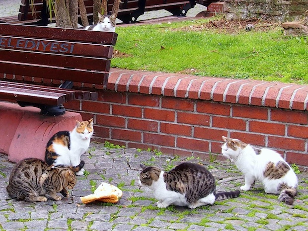 Cats and bread
