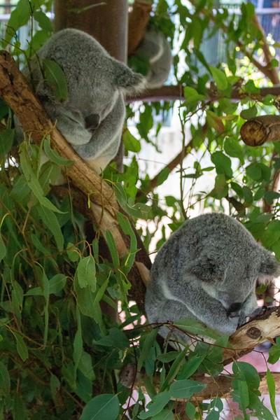 Australia_227.jpg