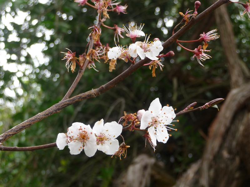 spring flowers-1000740.jpg