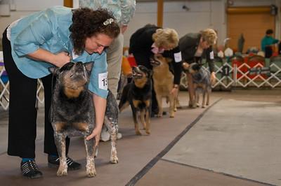 GCH Fair Dinkum's Action Jaxson - Apr_13_2012