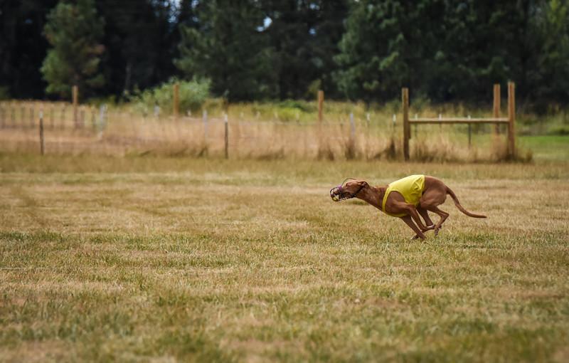 pharoahhound-17.jpg