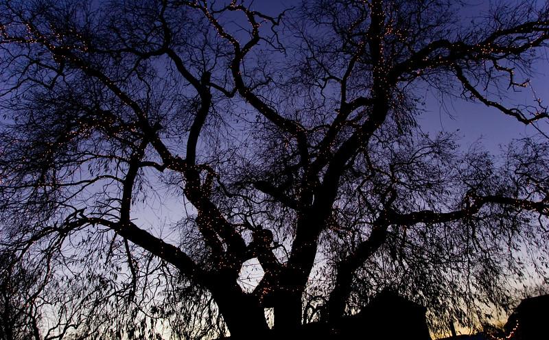 Træ med lys.jpg