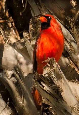 Birds & Sunrises