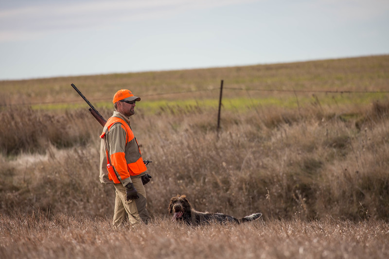 Pheasant Hunting with Pointer Dogs