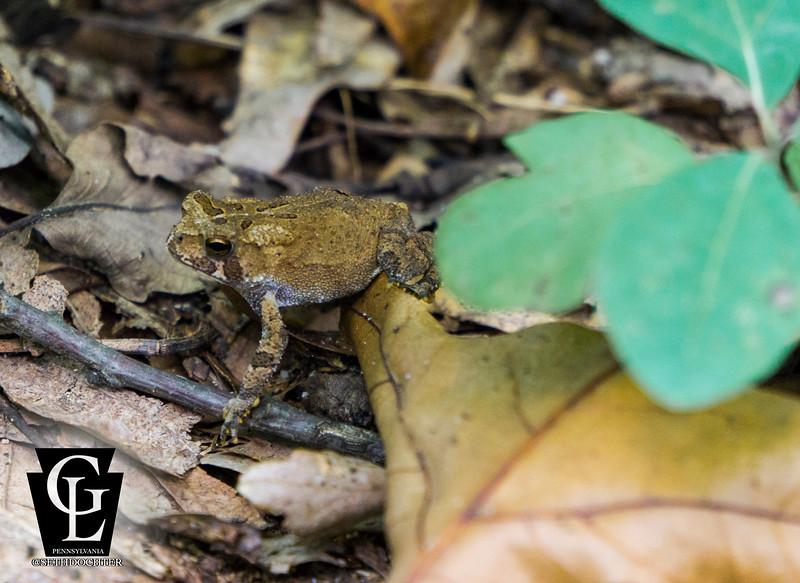 middlecreek - toad stepping (p).jpg