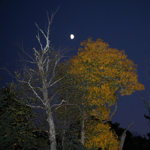 Backyard in Fall.jpg