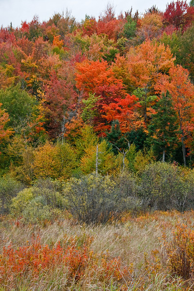 Autumn colors along Highway 100 (photo by Kerry Brooks)