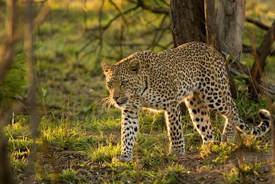 South Africa - Kruger Nat'l Park Safari
