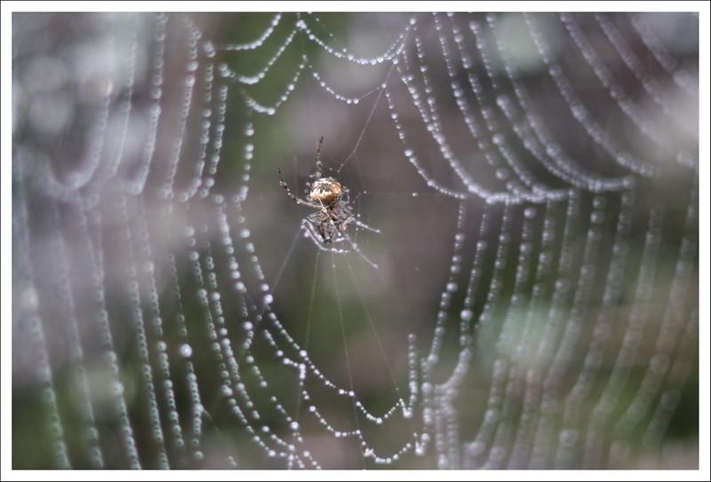 DSC_2132 spider composit.jpg