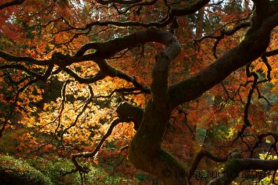 10-27-17 Japanese Garden