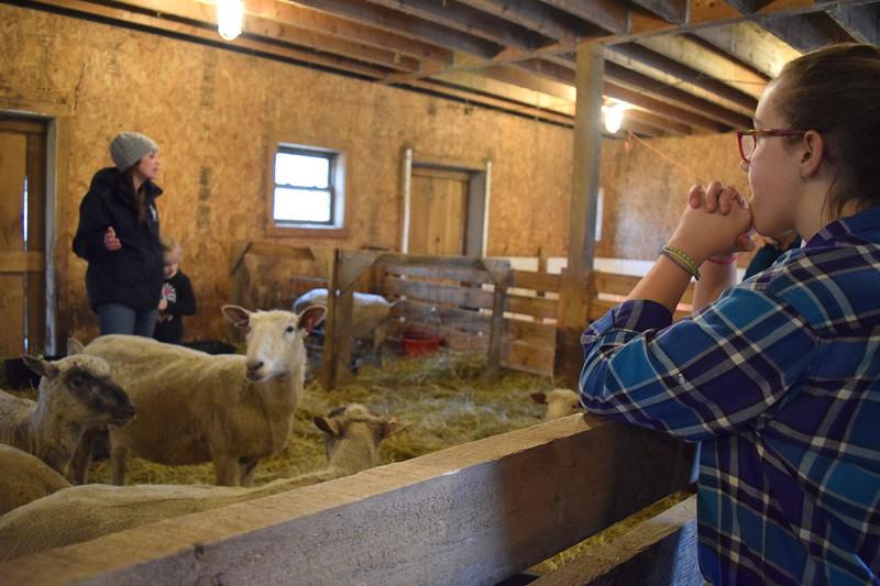 Esy 3 ella learns about sheep.JPG