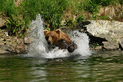 BEAR VIEWING #04