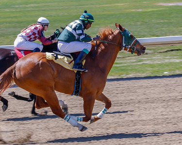 Ajax Downs Horse Racing