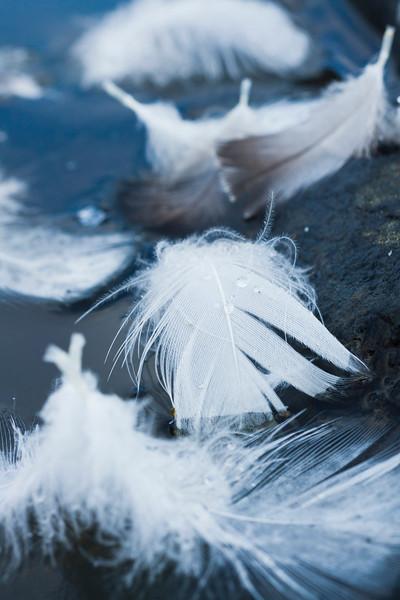 Fallen Feathers