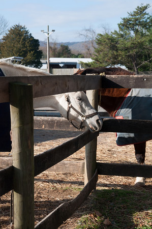 Horseback Riding 10-5-12
