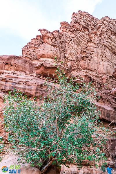 Wadi-Rum-05235.jpg