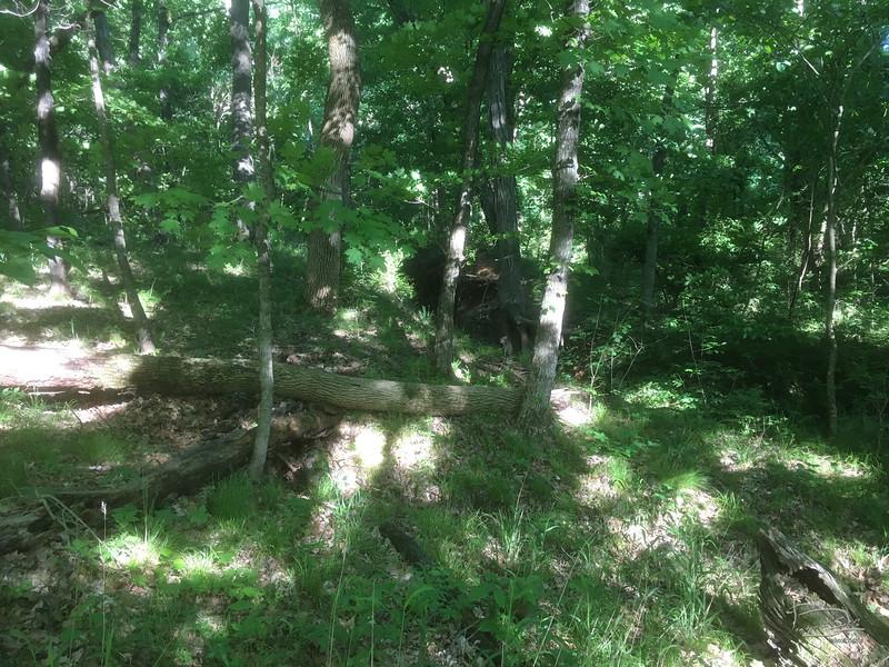dead tree fell