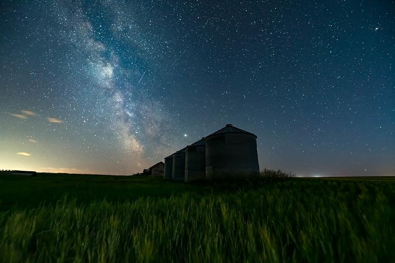 barley 22.jpg