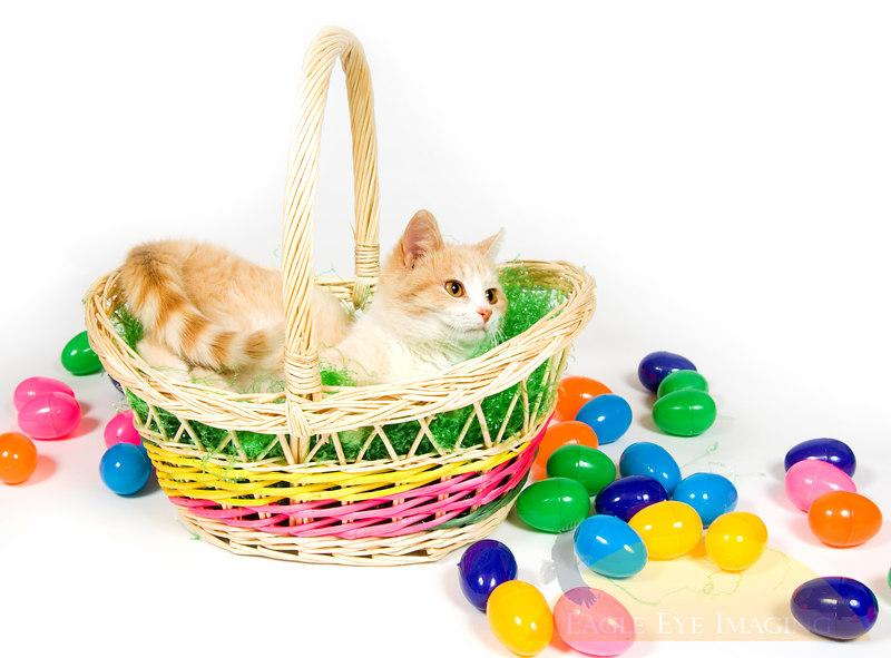 A cat climbs into an easter basket