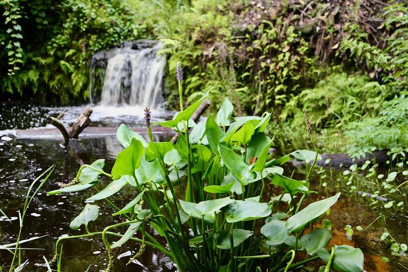 Waterfall 1 Plant.jpeg