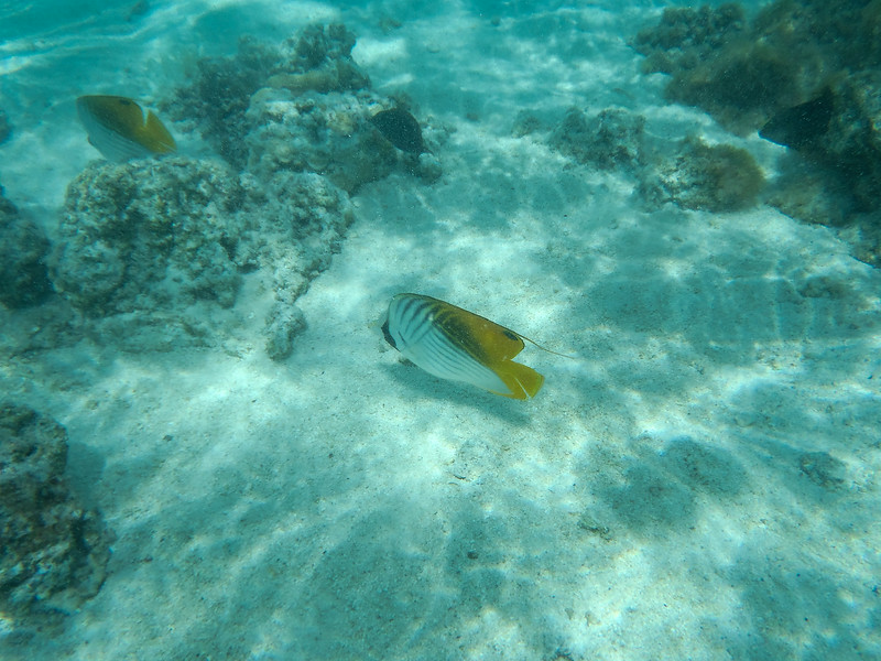 Snorkelling in the lagoon!