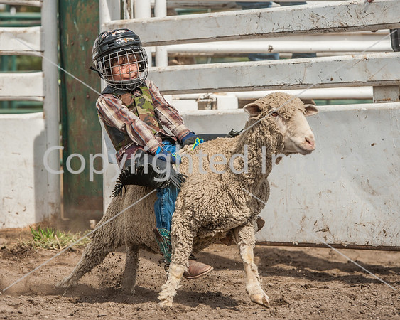 2017 Pincher Creek Mutton Bustin