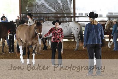 Halter Stallion and Geldings(1-6)