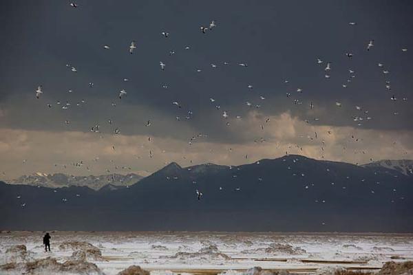 mono-the-birds-2.jpg