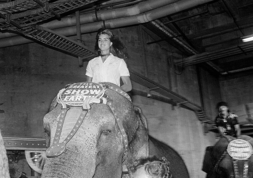 . Actress and model Brooke Shield sits tall atop an elephant as she participates in the Galaxy of Stars Gala for the benefit of Vista Del Mare Child Care Services, during the opening of the Ringling Brothers and Barnum and Bailey Circus on July 21,1982 in Los Angeles. (AP Photo/ Nick Ut)