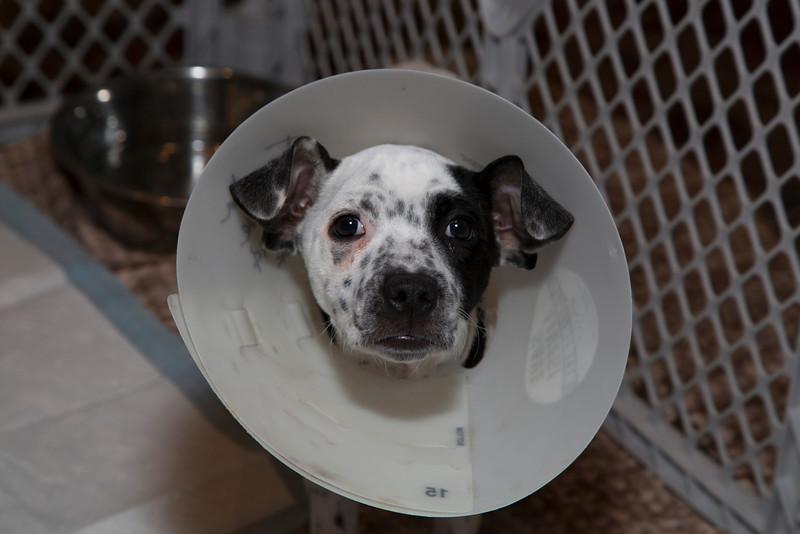 Puppy 1 (20140518-AWT-GC-117).jpg