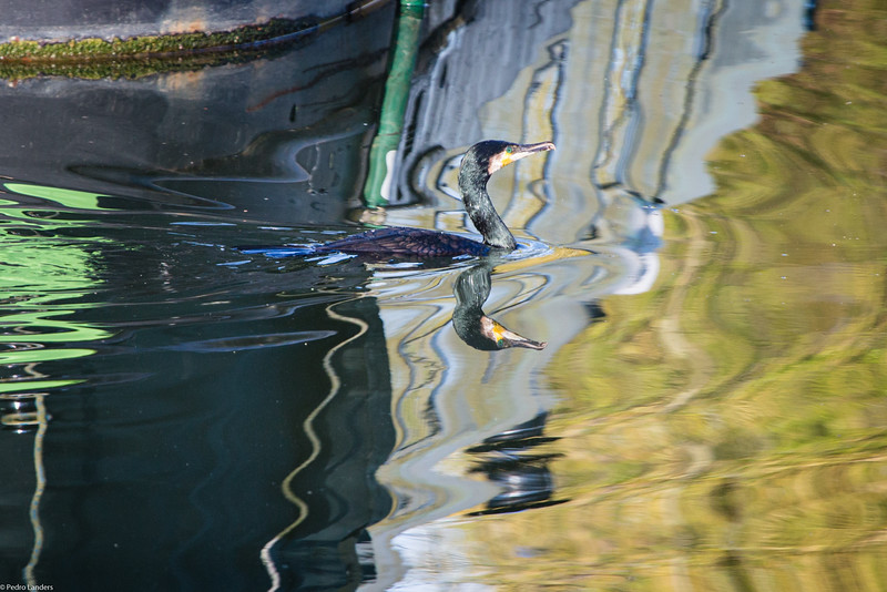River Stort Reflections.jpg