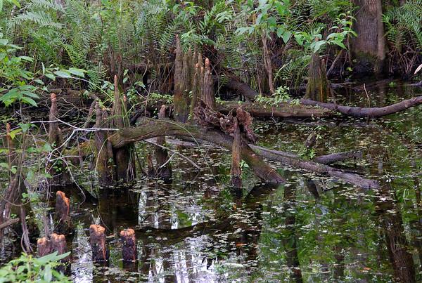 Florida landscapes winter 2007