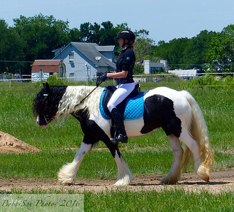 Working Equitation Show - June 2016