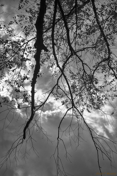 Low Branches