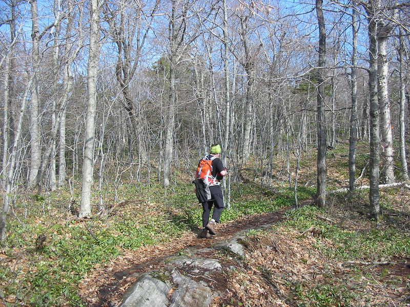 Greg on the Lambert Ridge birch glades