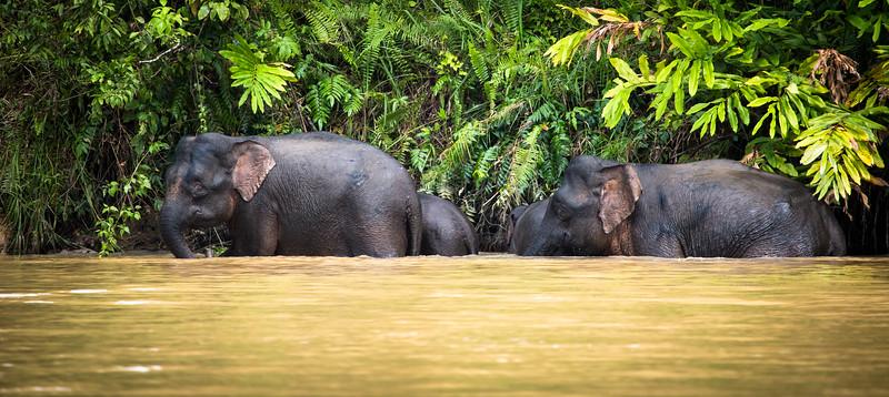 Elephants In Transit