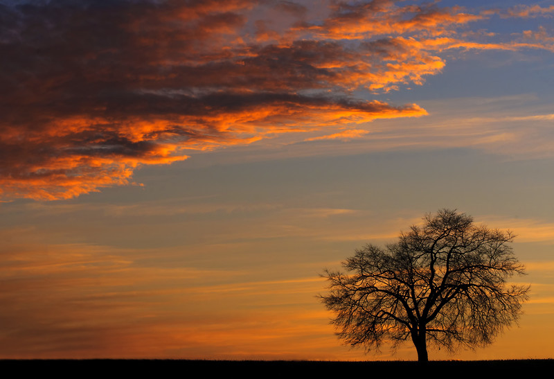 Monocacy tree at Sunset Three.jpg