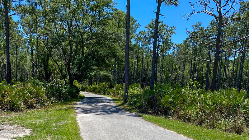 Bike path in pine woods