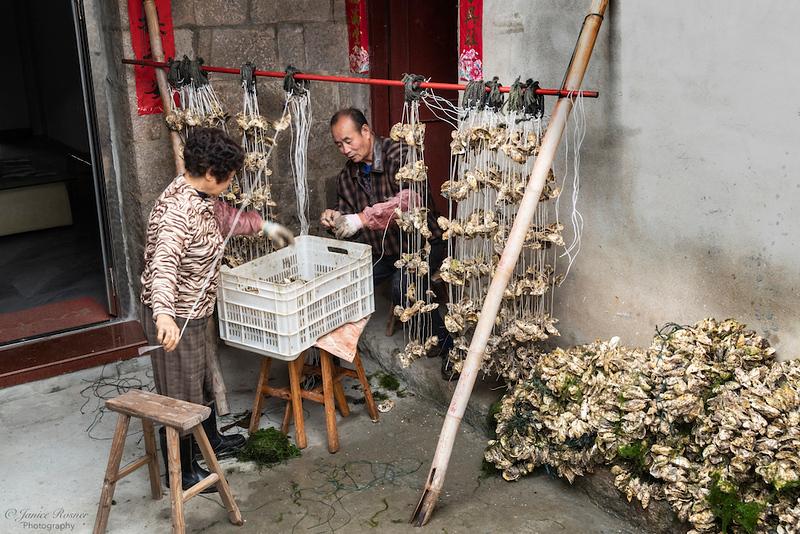 Preparing oyster shells