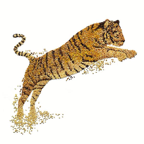 Photographer-David-Arky-Conceptual-Still-Life-Creative-Space-Artists-Management-11-World-wildlife-Fund.jpg