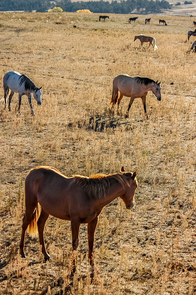 Wild Horse Group #2