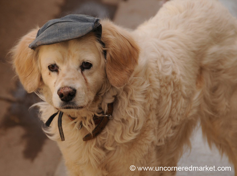 Dog in a Painter's Cap (or, Portrait of the Artist as a Young Dog)