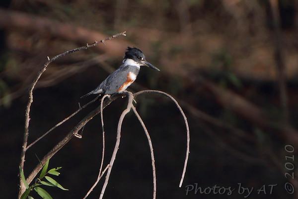 2010-10-09/10 Riverlands Migratory Bird Sanctuary