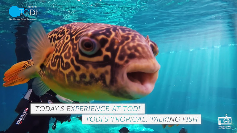 """TODI TODAY: TODI's Tropical, Talking Fish - Season 1 Episode 2: """"Are we there, yet?"""""""